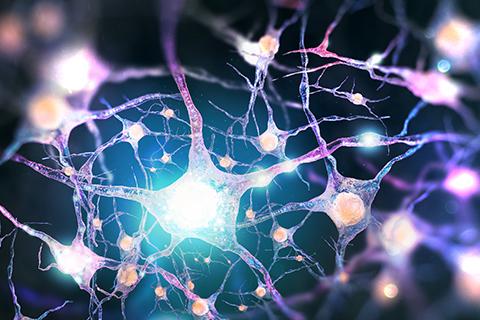 Home | Neuroscience Program | University of Miami